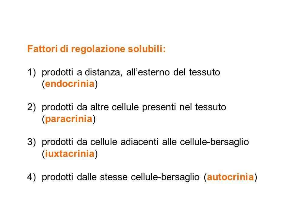 Fattori di regolazione solubili: