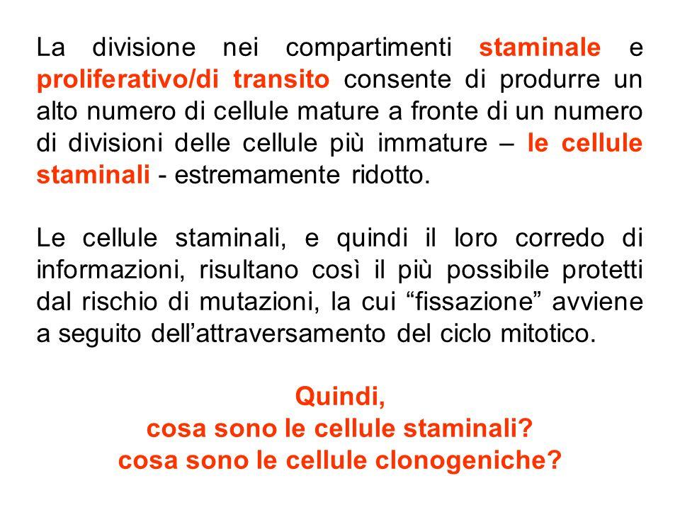 cosa sono le cellule staminali cosa sono le cellule clonogeniche