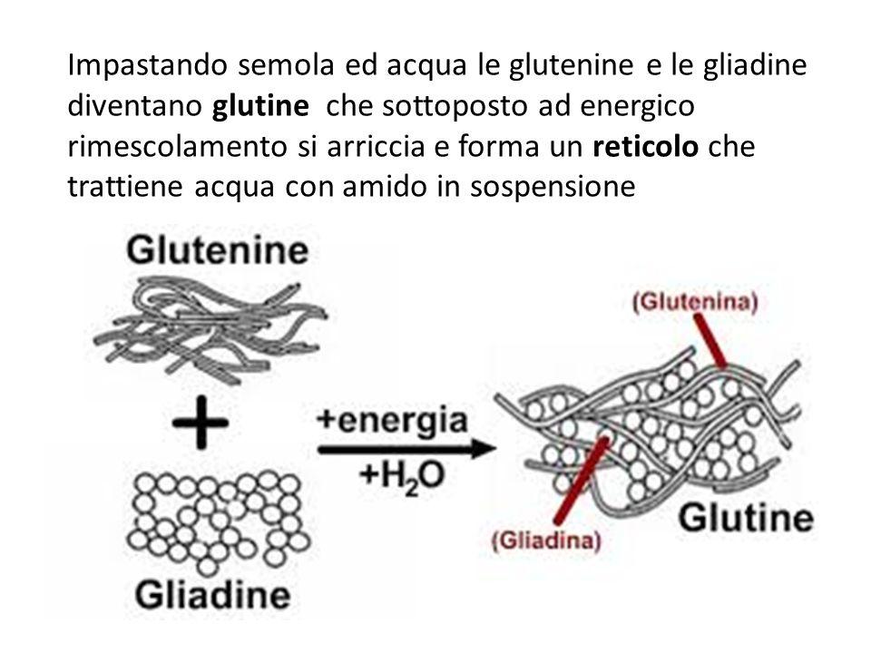 Impastando semola ed acqua le glutenine e le gliadine diventano glutine che sottoposto ad energico rimescolamento si arriccia e forma un reticolo che trattiene acqua con amido in sospensione