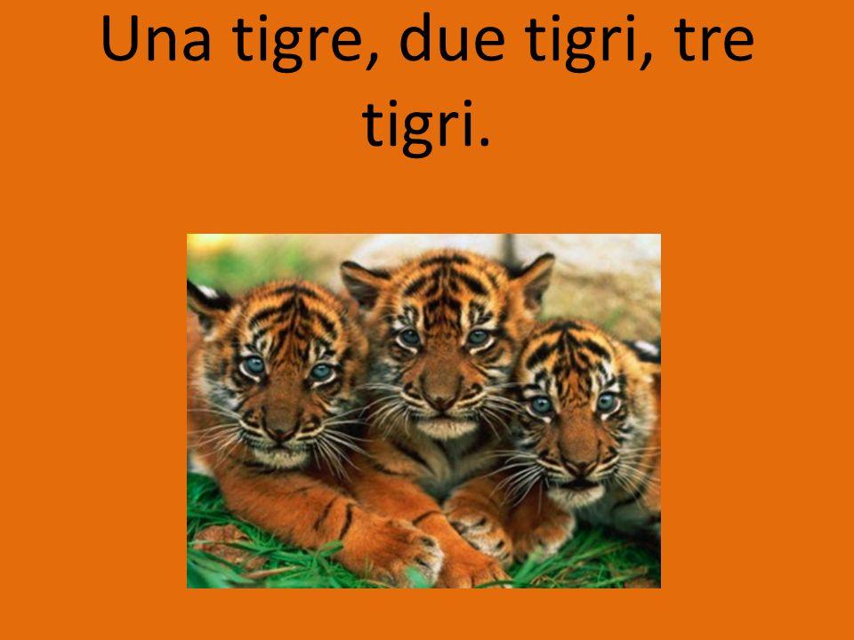 Una tigre, due tigri, tre tigri.