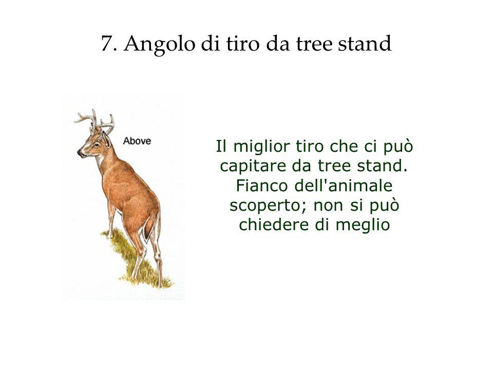 7. Angolo di tiro da tree stand