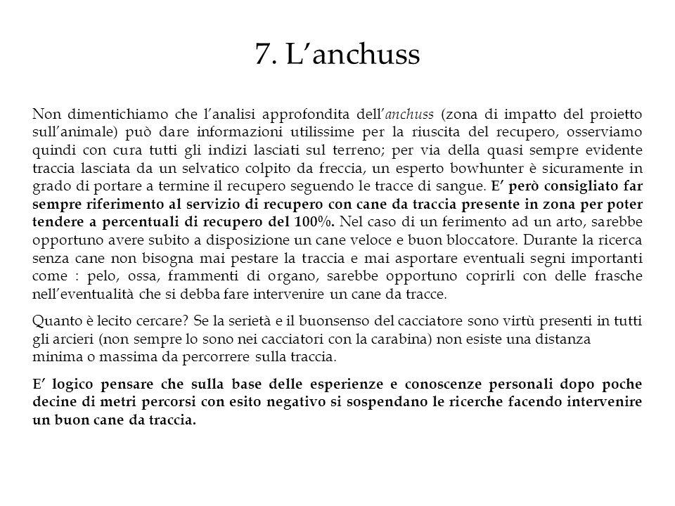 7. L'anchuss