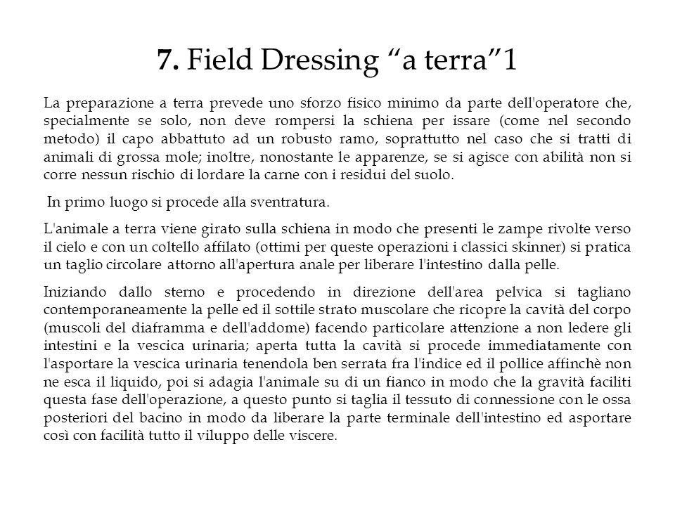 7. Field Dressing a terra 1