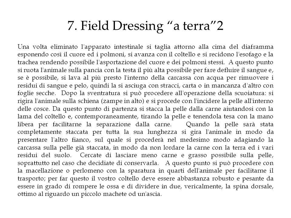 7. Field Dressing a terra 2