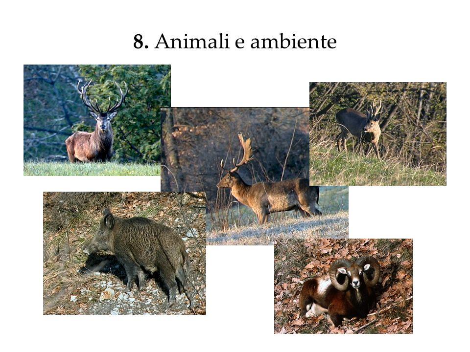 8. Animali e ambiente