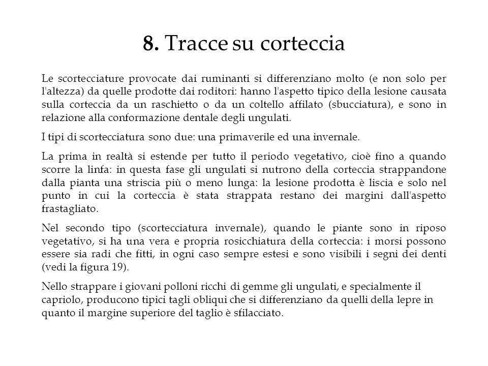 8. Tracce su corteccia
