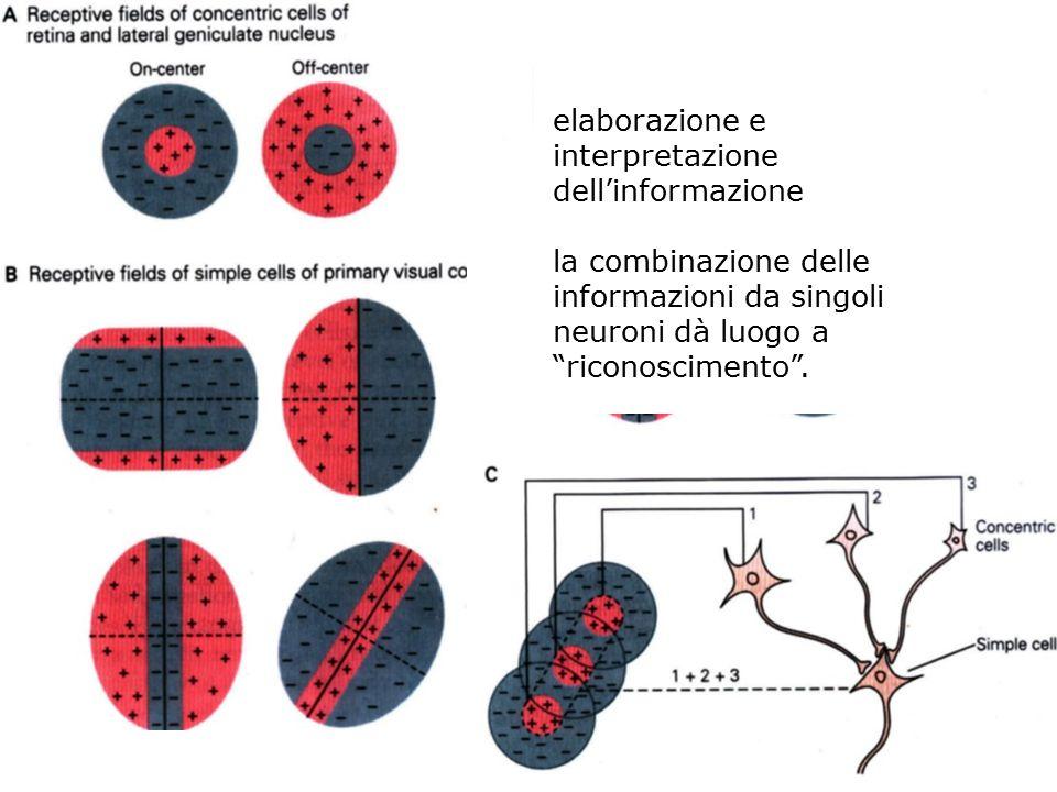 elaborazione e interpretazione dell'informazione