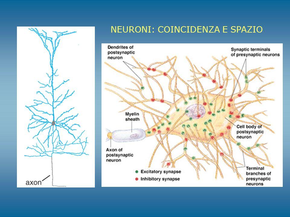NEURONI: COINCIDENZA E SPAZIO