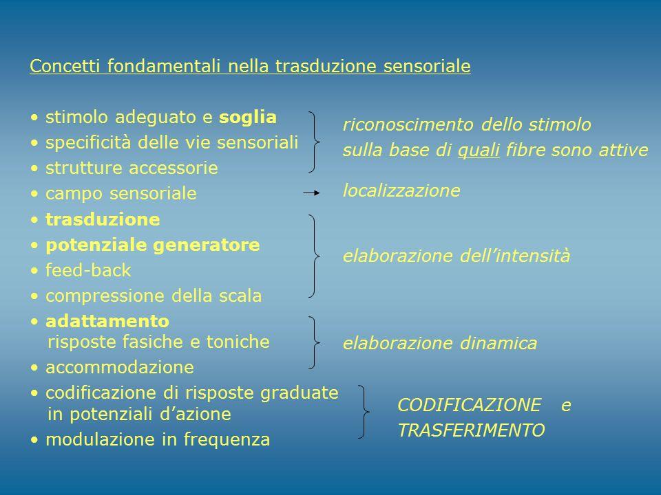 Concetti fondamentali nella trasduzione sensoriale