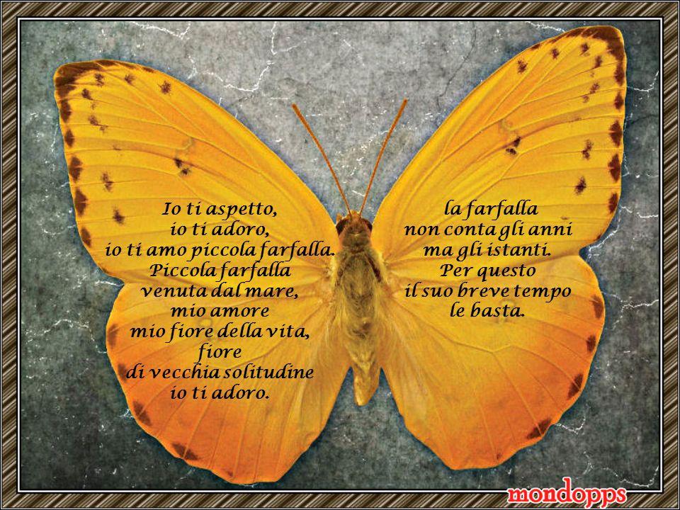 io ti amo piccola farfalla.