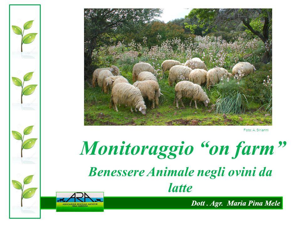Monitoraggio on farm Benessere Animale negli ovini da latte