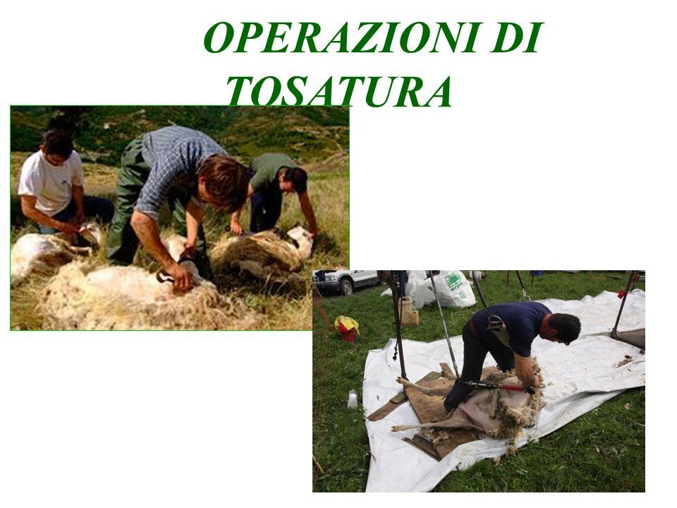 OPERAZIONI DI TOSATURA