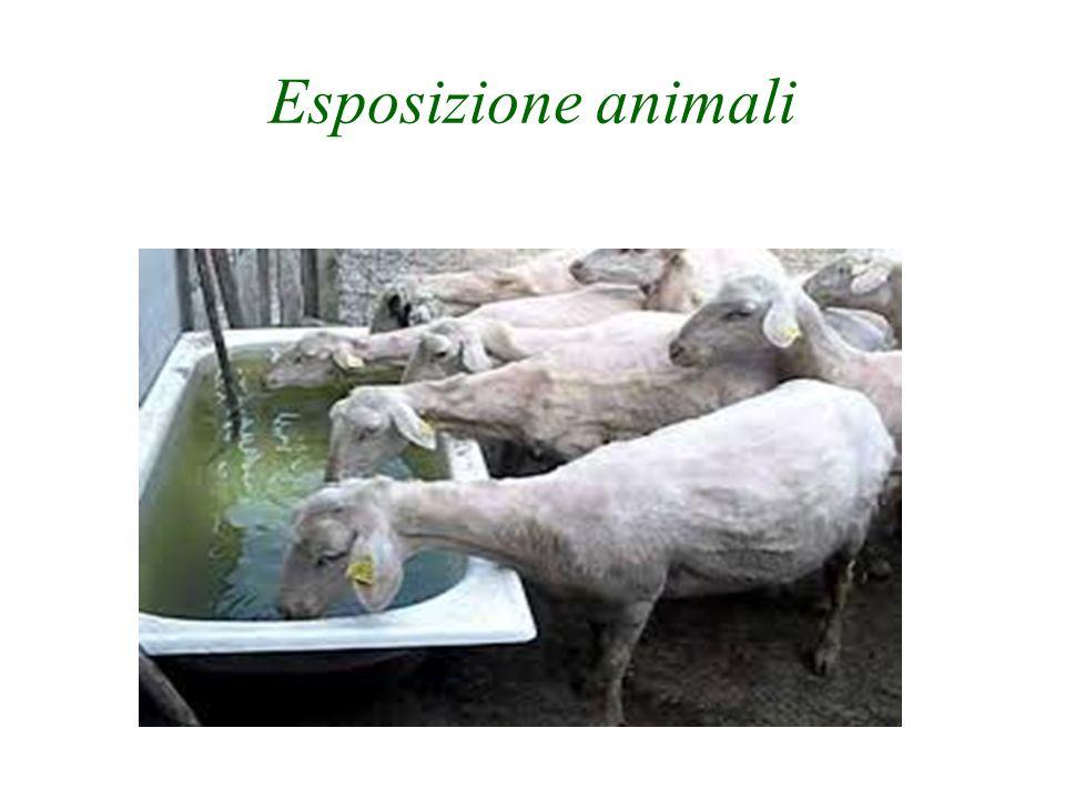 Esposizione animali
