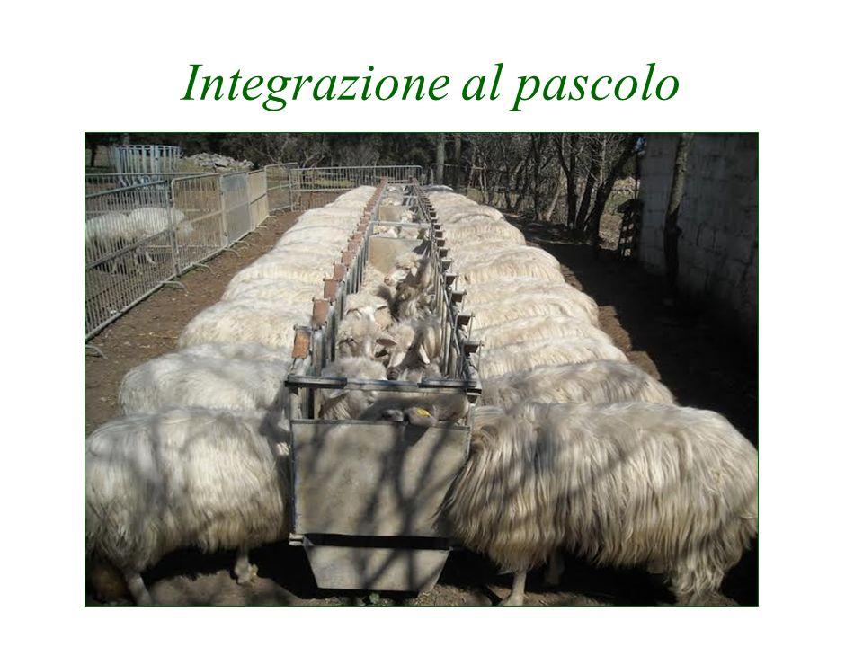 Integrazione al pascolo