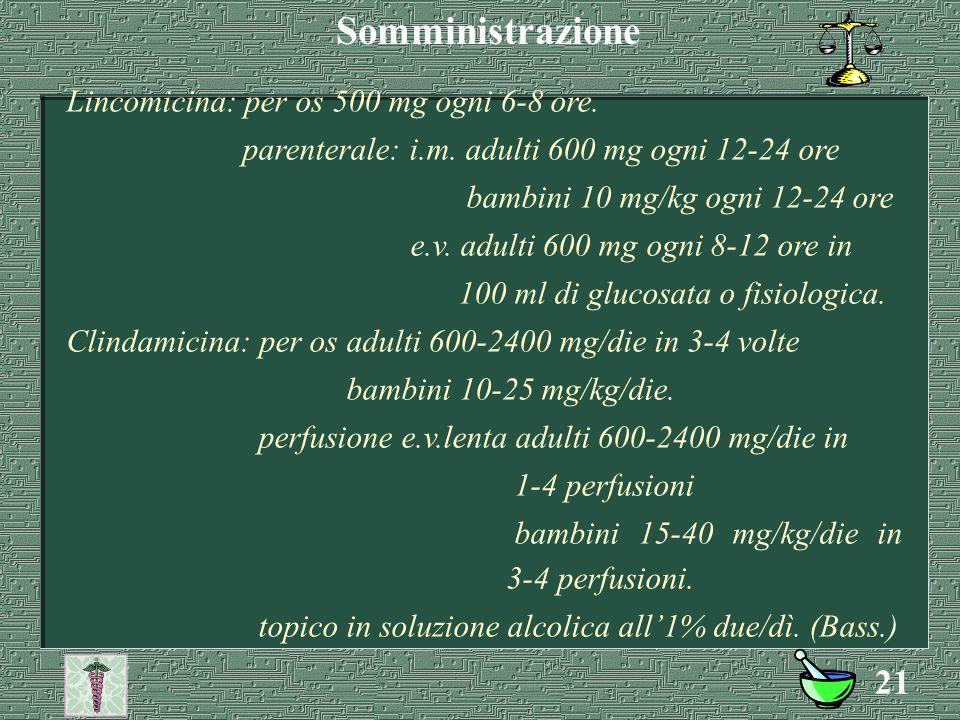 Somministrazione Lincomicina: per os 500 mg ogni 6-8 ore.