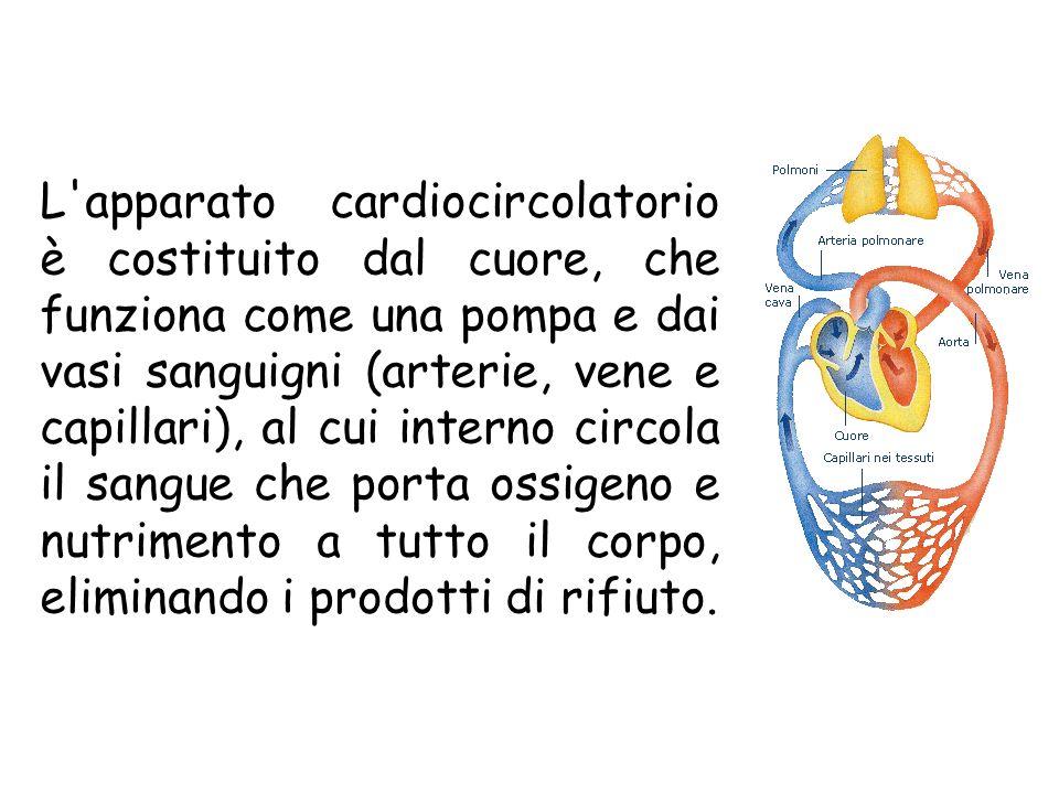 L apparato cardiocircolatorio è costituito dal cuore, che funziona come una pompa e dai vasi sanguigni (arterie, vene e capillari), al cui interno circola il sangue che porta ossigeno e nutrimento a tutto il corpo, eliminando i prodotti di rifiuto.