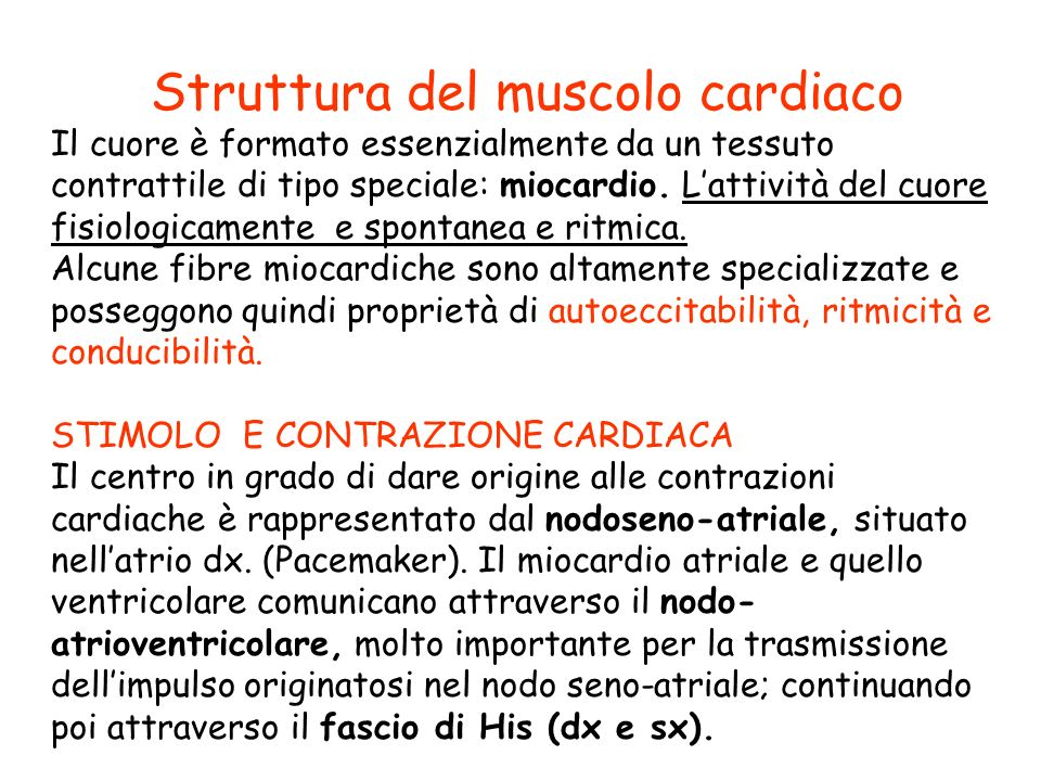 Struttura del muscolo cardiaco