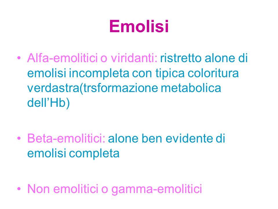 Emolisi Alfa-emolitici o viridanti: ristretto alone di emolisi incompleta con tipica coloritura verdastra(trsformazione metabolica dell'Hb)