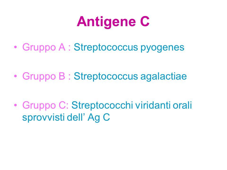 Antigene C Gruppo A : Streptococcus pyogenes
