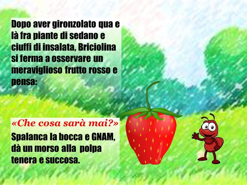 Dopo aver gironzolato qua e là fra piante di sedano e ciuffi di insalata, Briciolina si ferma a osservare un meraviglioso frutto rosso e pensa: