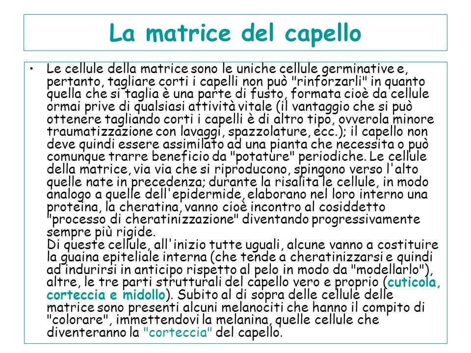 La matrice del capello