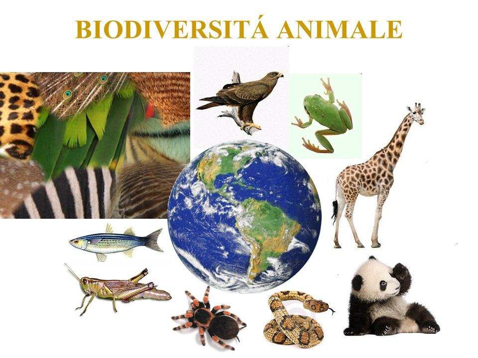 BIODIVERSITÁ ANIMALE
