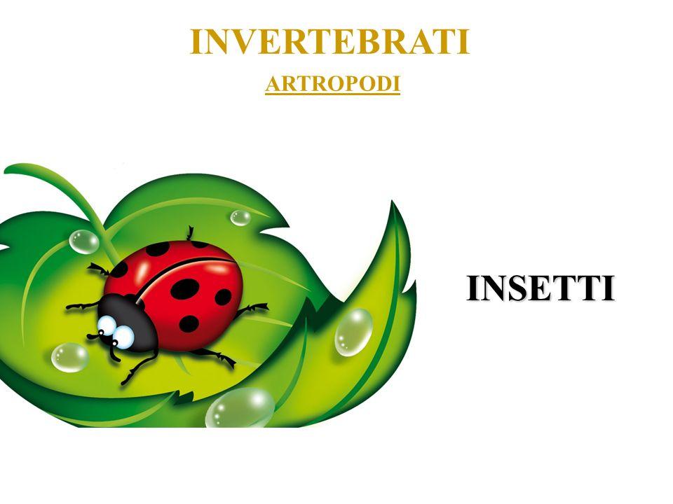 INVERTEBRATI ARTROPODI INSETTI