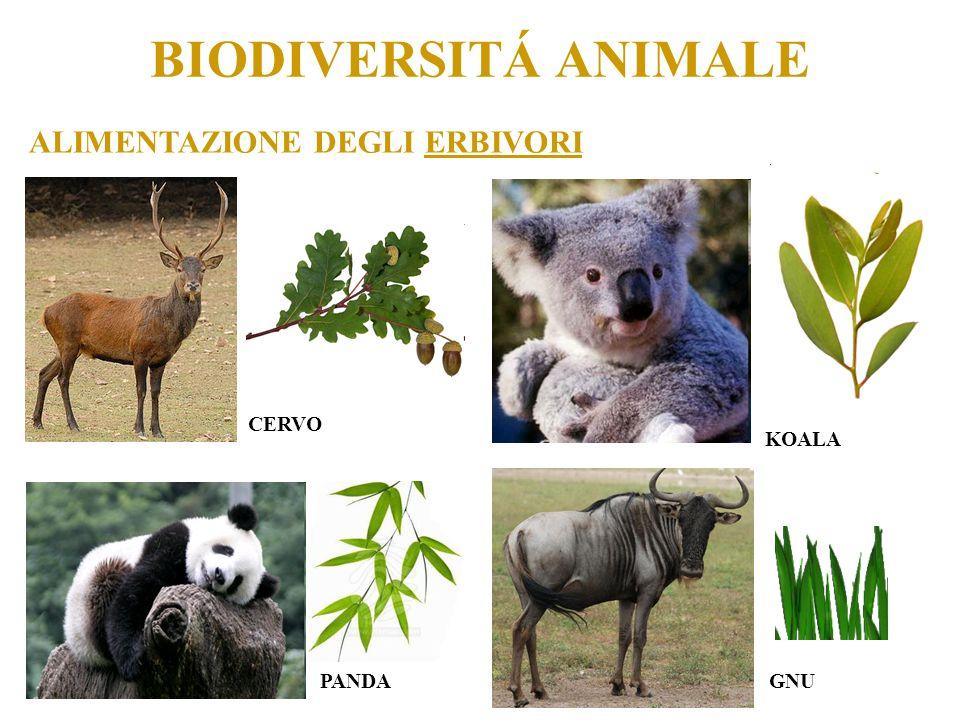 BIODIVERSITÁ ANIMALE ALIMENTAZIONE DEGLI ERBIVORI CERVO KOALA PANDA