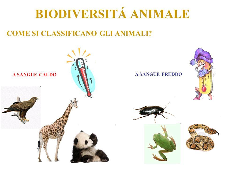 BIODIVERSITÁ ANIMALE COME SI CLASSIFICANO GLI ANIMALI A SANGUE CALDO