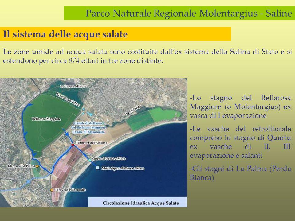Il parco naturale regionale molentargius saline ppt for Vasca per stagno