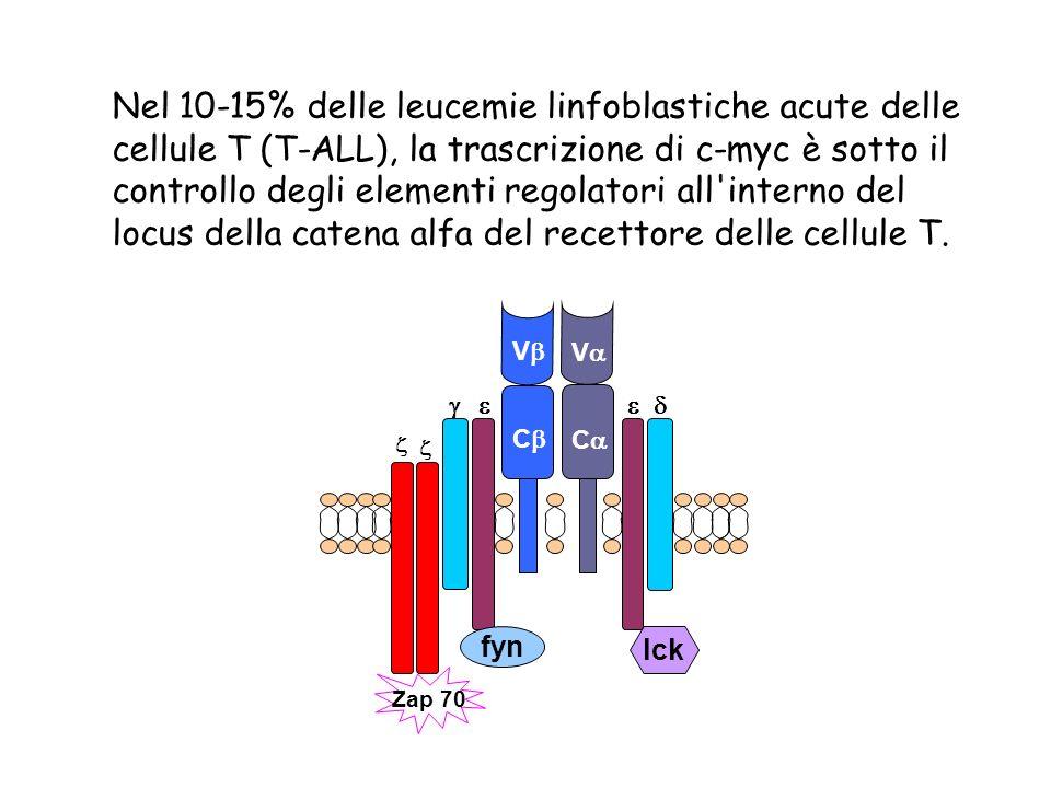 Nel 10-15% delle leucemie linfoblastiche acute delle cellule T (T-ALL), la trascrizione di c-myc è sotto il controllo degli elementi regolatori all interno del locus della catena alfa del recettore delle cellule T.