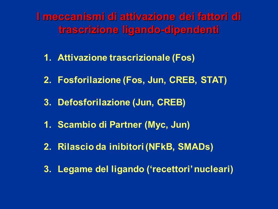 I meccanismi di attivazione dei fattori di trascrizione ligando-dipendenti