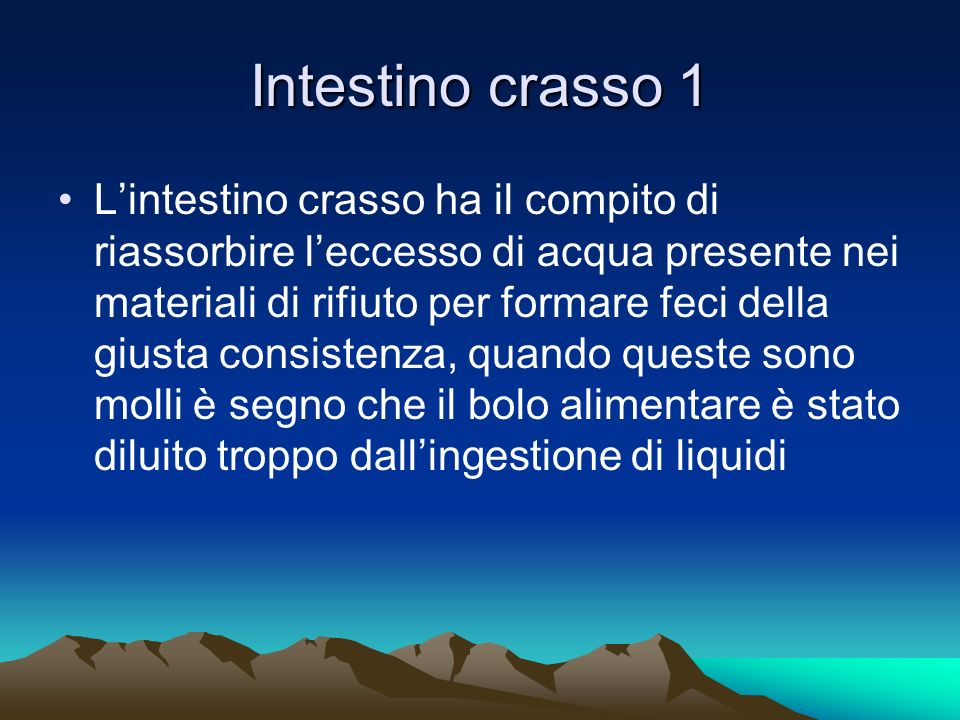 Intestino crasso 1