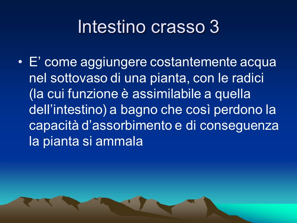Intestino crasso 3