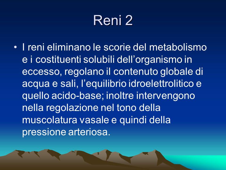 Reni 2