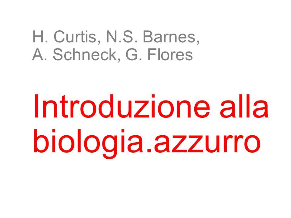 H. Curtis, N.S. Barnes, A. Schneck, G. Flores