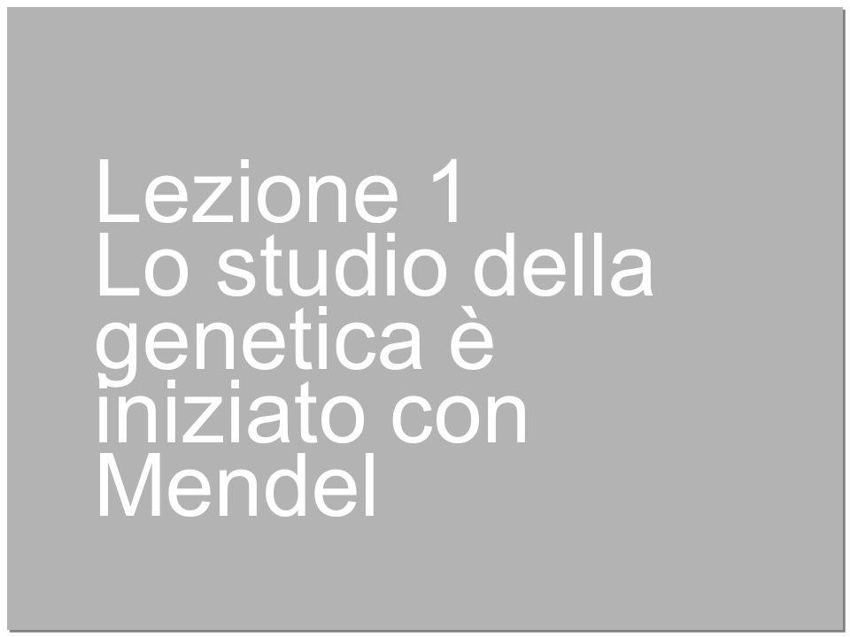 Lezione 1 Lo studio della genetica è iniziato con Mendel