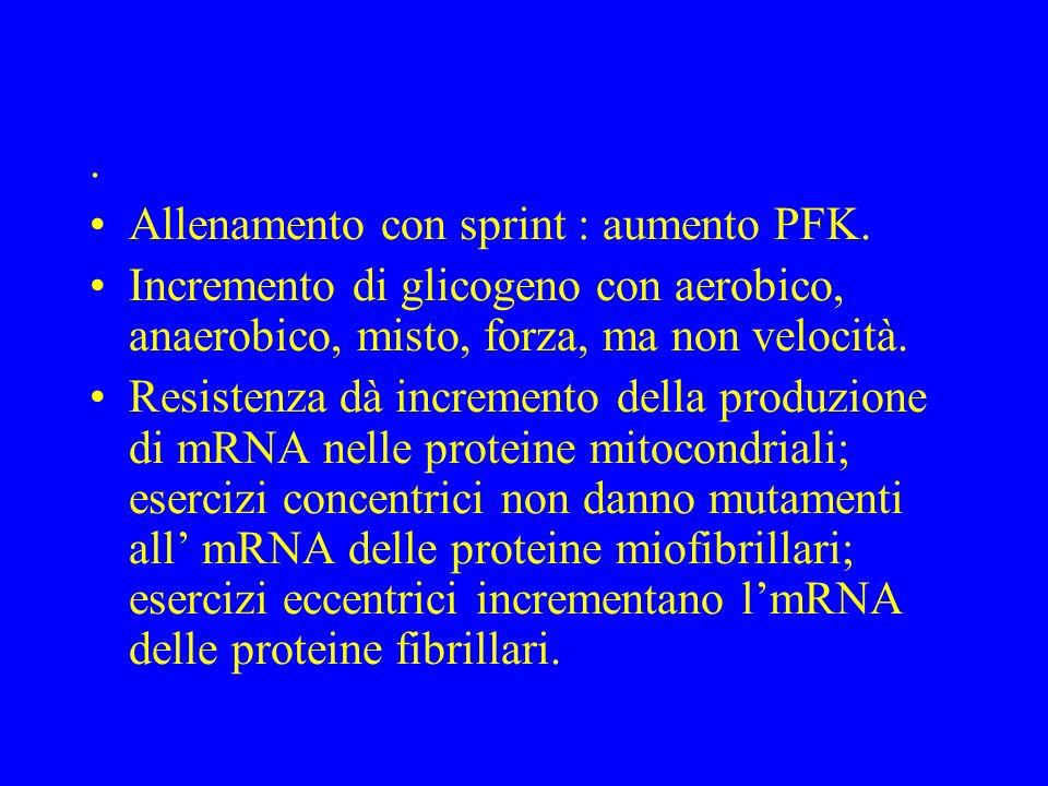 . Allenamento con sprint : aumento PFK. Incremento di glicogeno con aerobico, anaerobico, misto, forza, ma non velocità.