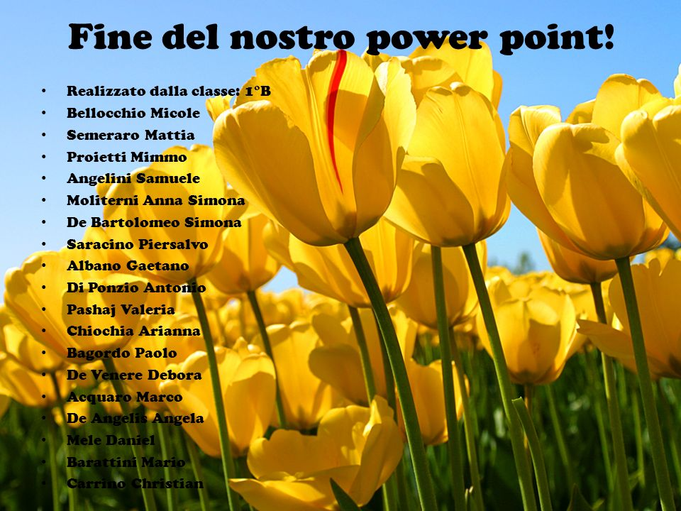 Fine del nostro power point!