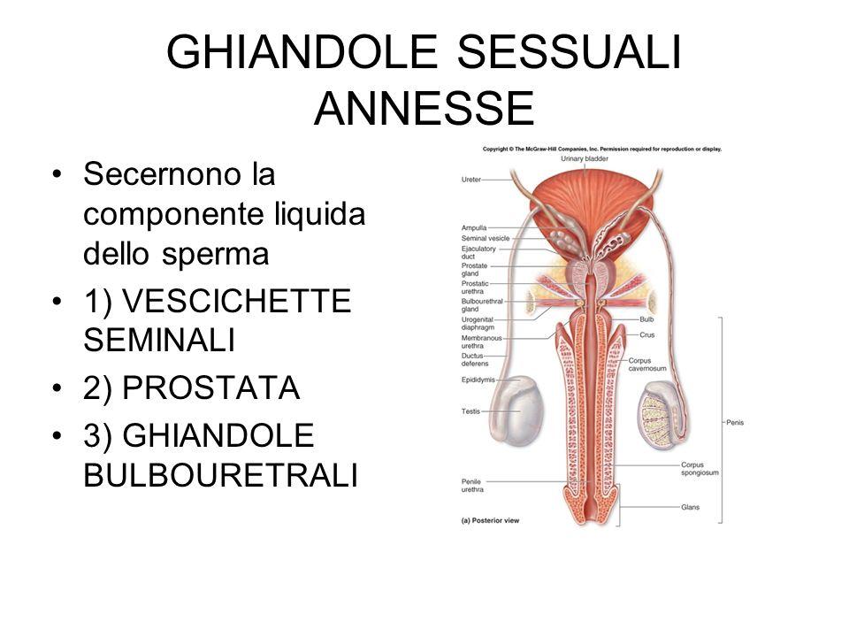 GHIANDOLE SESSUALI ANNESSE