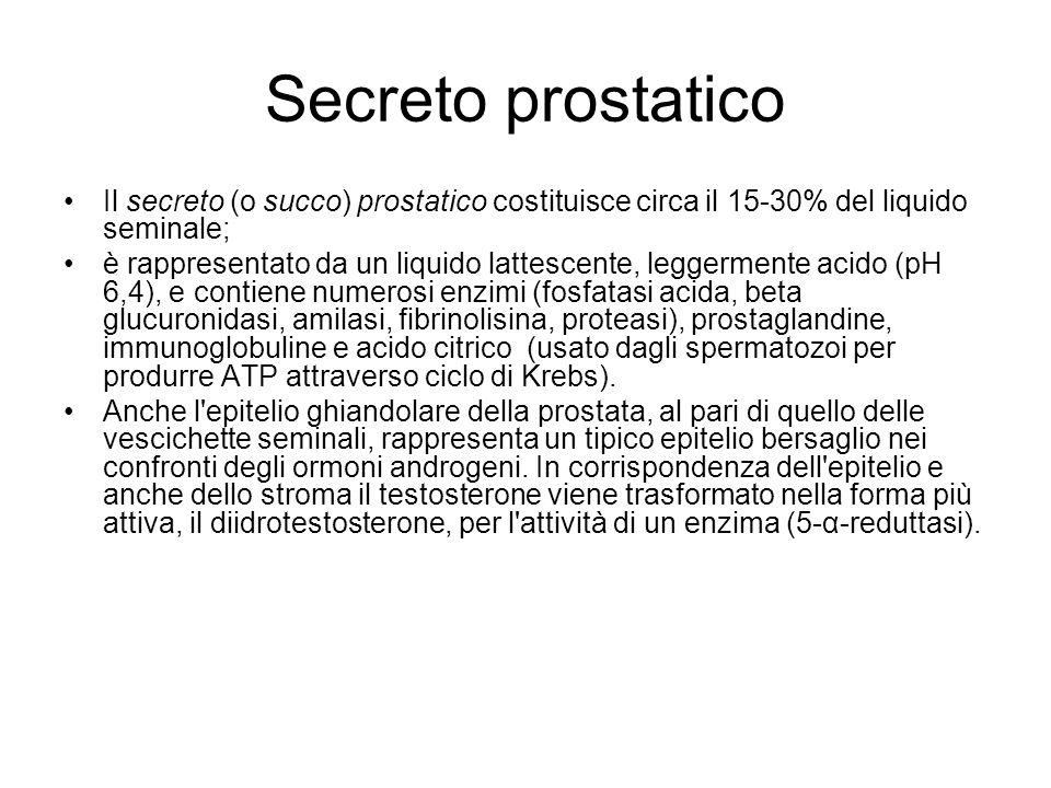 Secreto prostatico Il secreto (o succo) prostatico costituisce circa il 15-30% del liquido seminale;