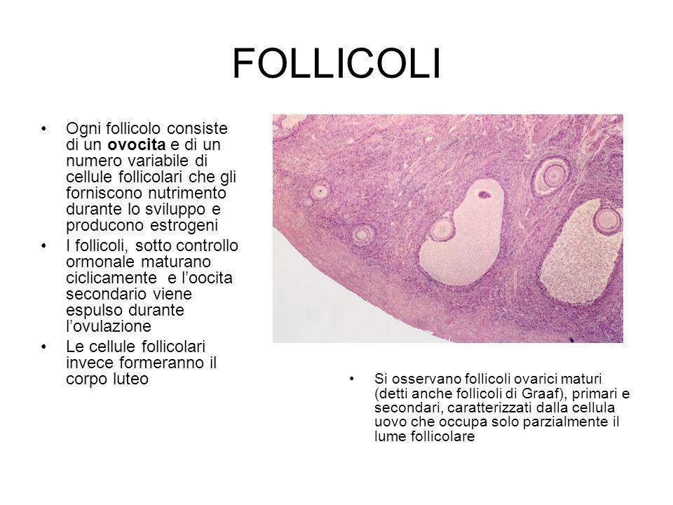 FOLLICOLI
