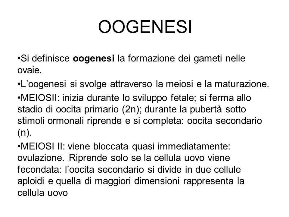 OOGENESI Si definisce oogenesi la formazione dei gameti nelle ovaie.
