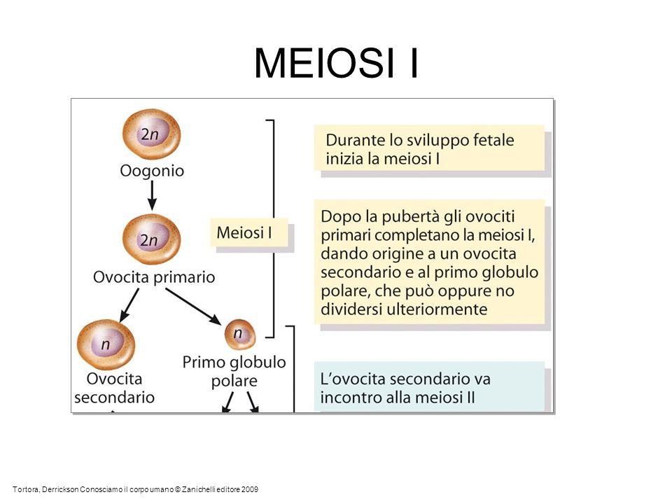 MEIOSI I ALLA NASCITA LE CELLULE UOVO SONO FERME ALLO STADIO DI OOCITA PRIMARIO.