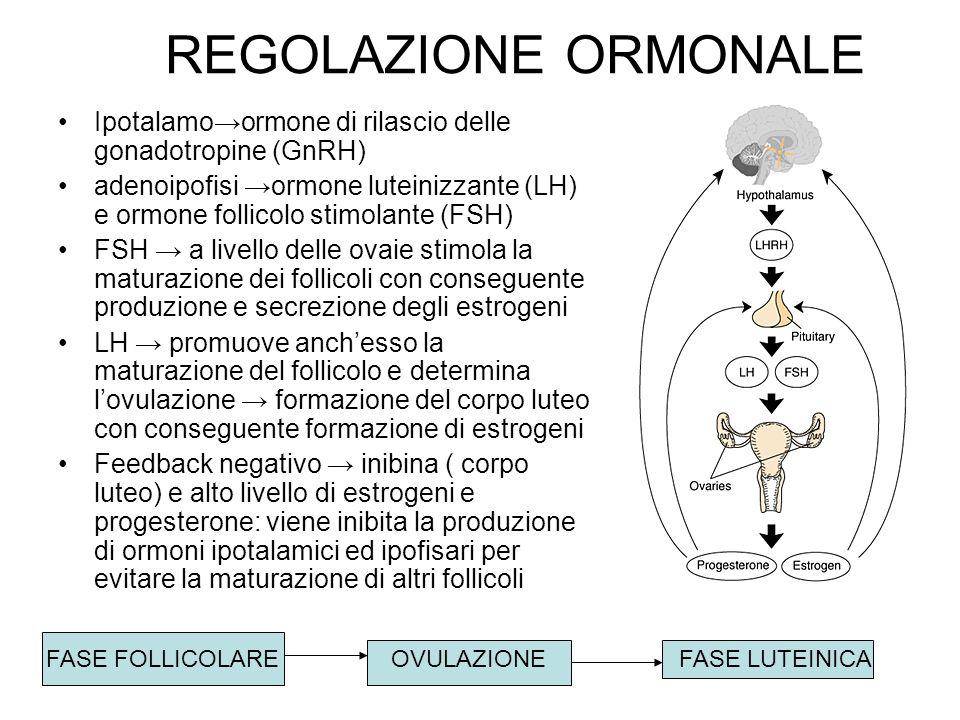 REGOLAZIONE ORMONALEIpotalamo→ormone di rilascio delle gonadotropine (GnRH)