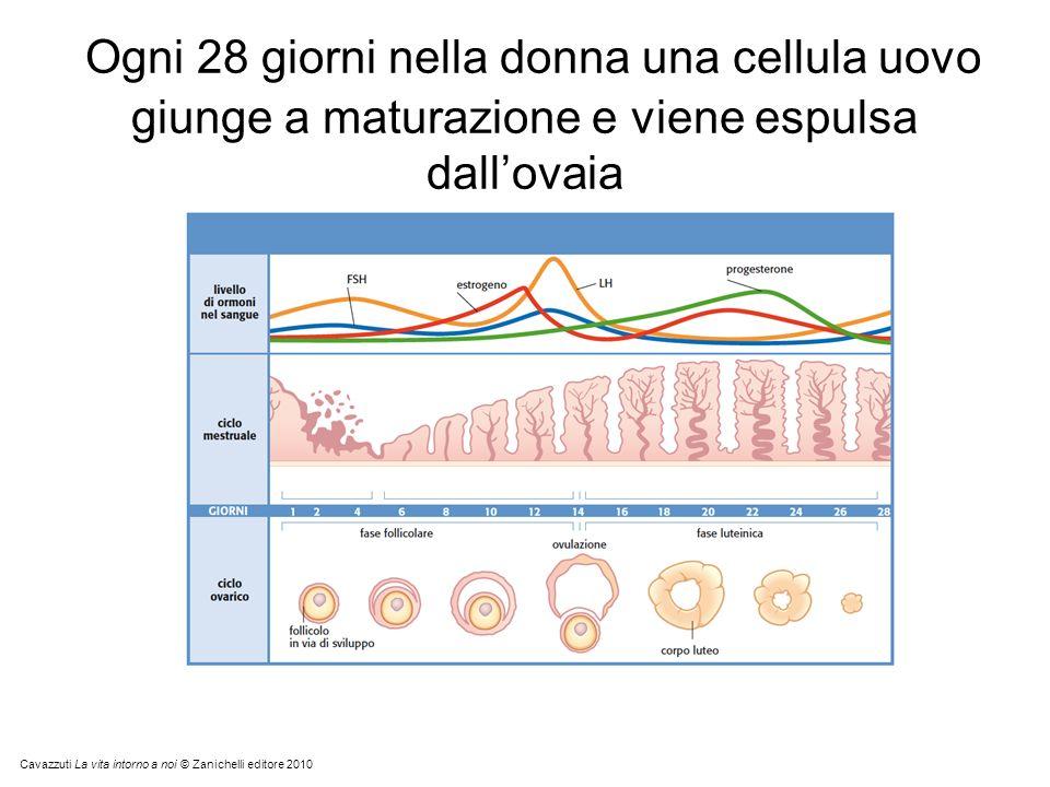 Ogni 28 giorni nella donna una cellula uovo giunge a maturazione e viene espulsa dall'ovaia