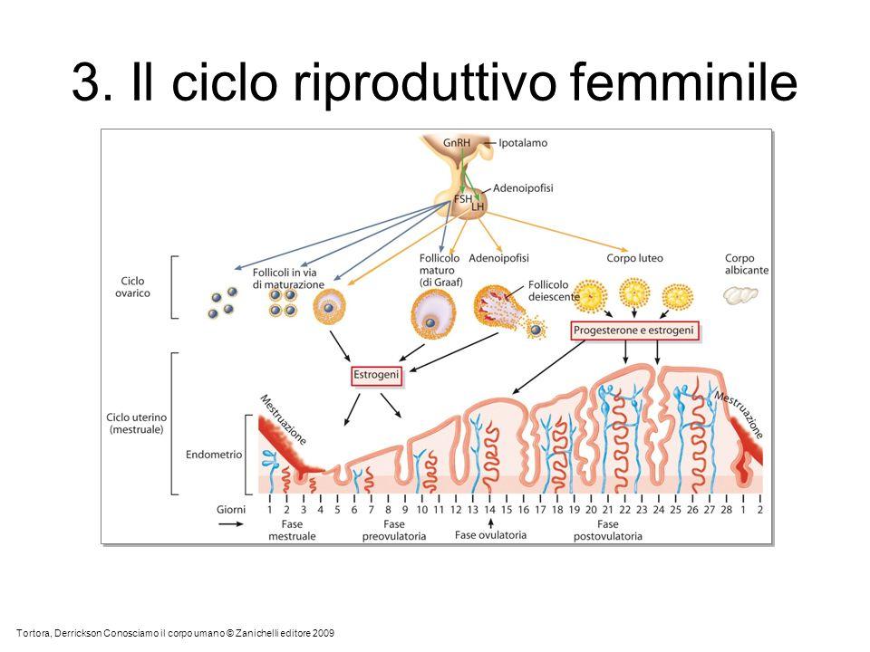3. Il ciclo riproduttivo femminile