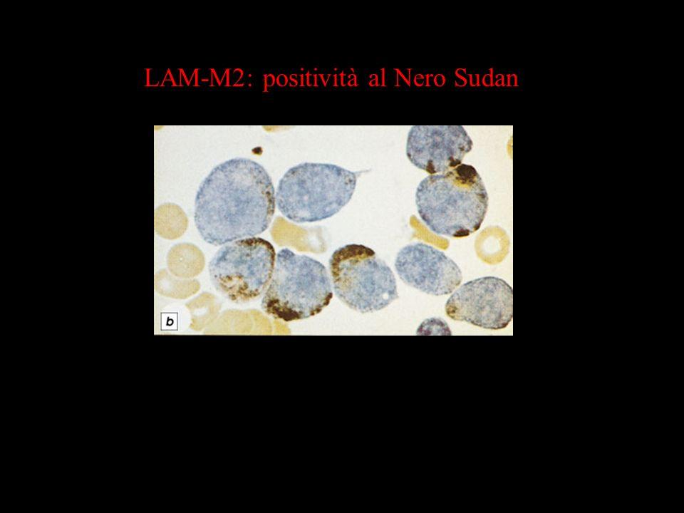LAM-M2: positività al Nero Sudan