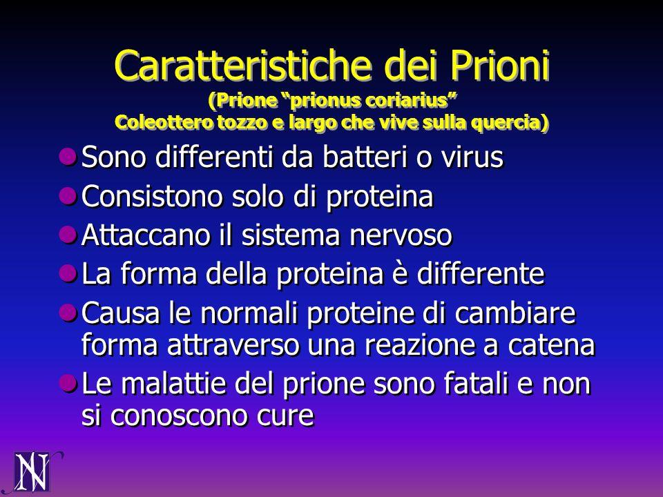Caratteristiche dei Prioni (Prione prionus coriarius Coleottero tozzo e largo che vive sulla quercia)