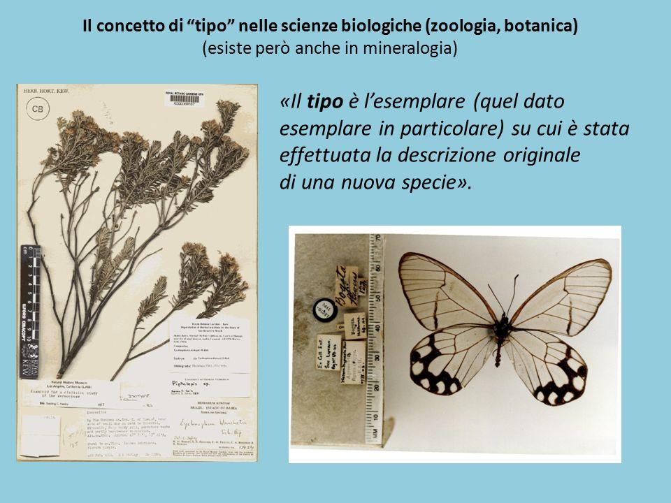 Il concetto di tipo nelle scienze biologiche (zoologia, botanica)